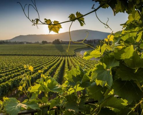 Itinerari vino Treviso - BHR Treviso Hotel