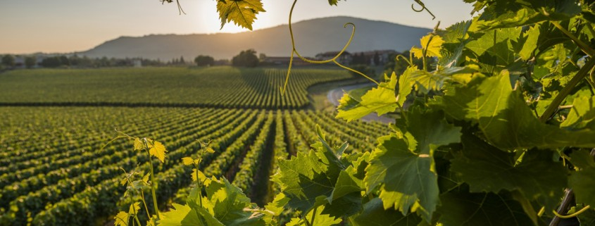 Wine itineraries Treviso - BHR Treviso Hotel