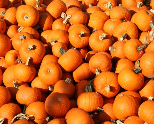 Halloween and All Saints offer in Treviso